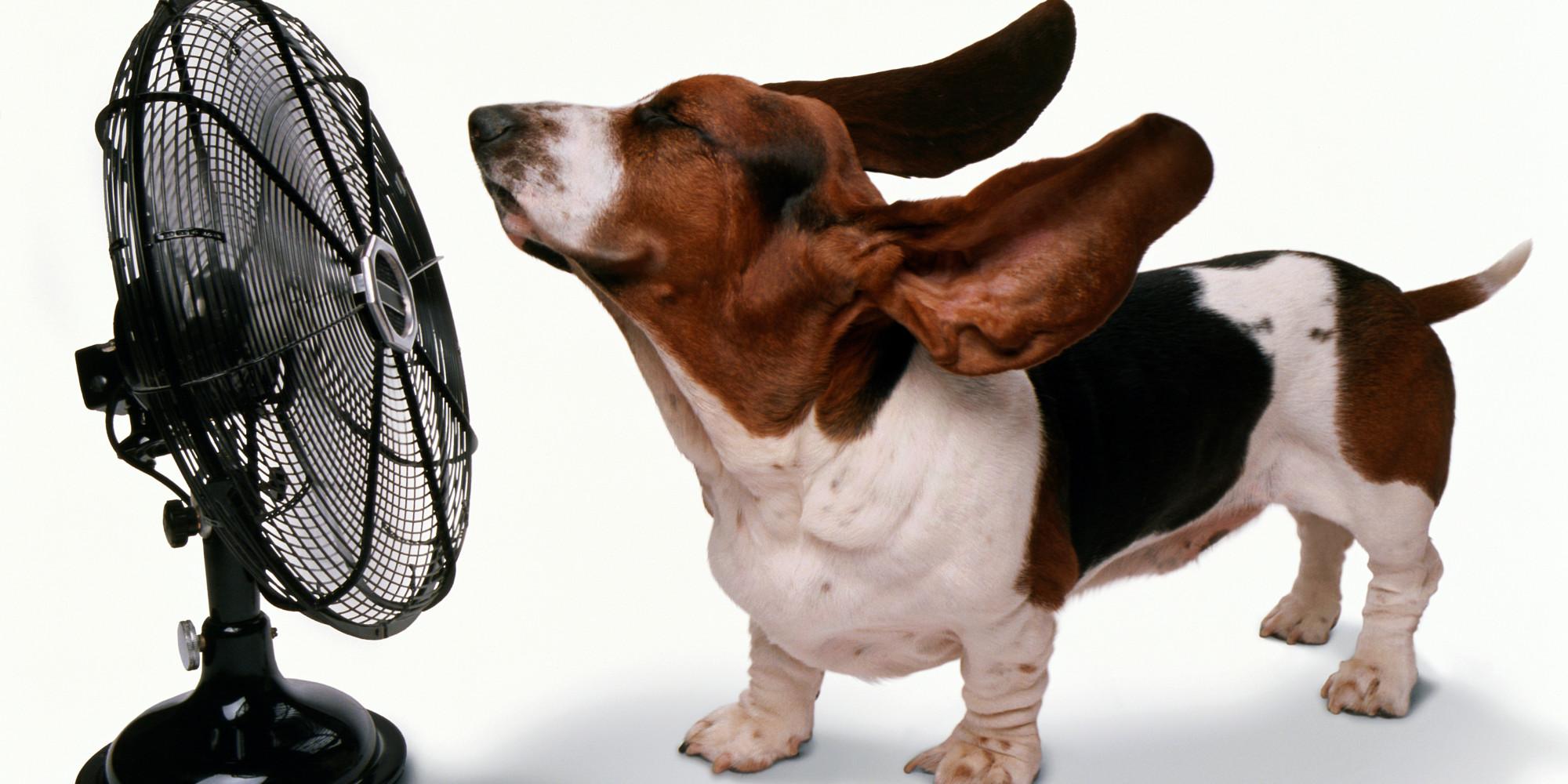 Dog With Fan : Dog fan white background dalton heating cooling